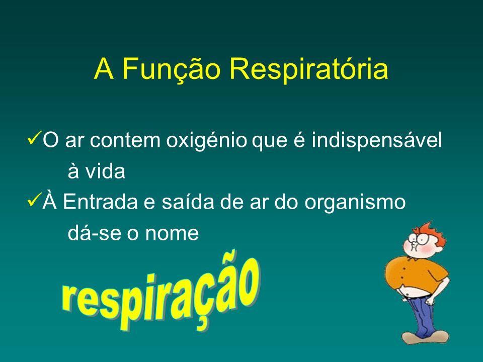 A Função Respiratória respiração