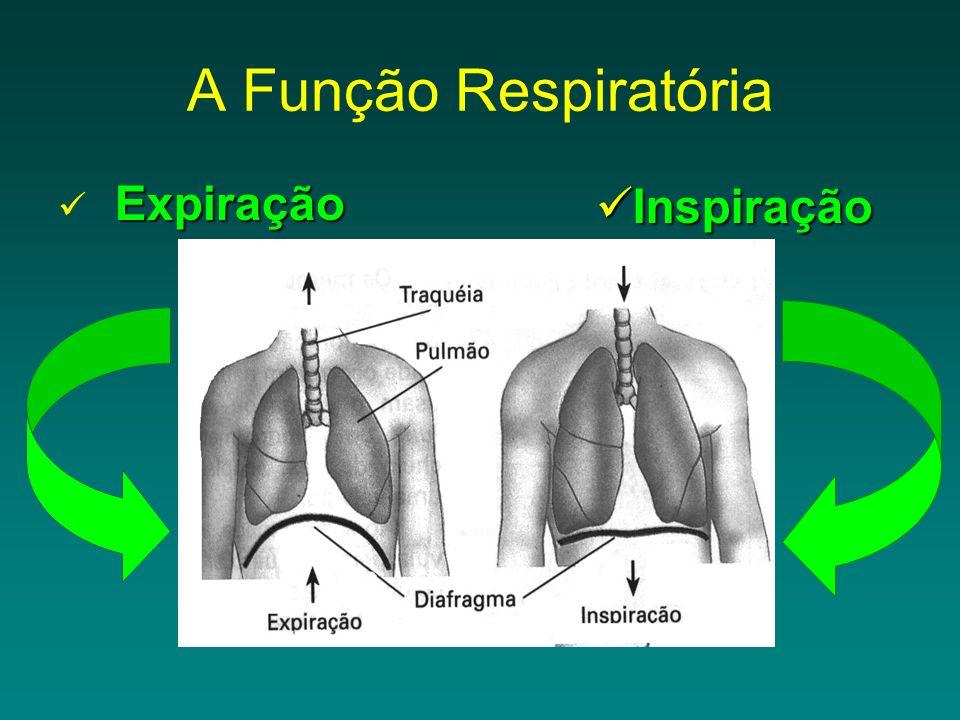 A Função Respiratória Expiração Inspiração
