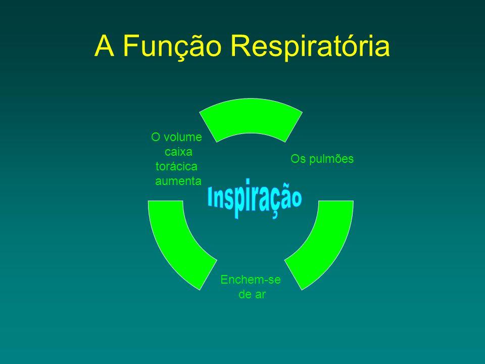 A Função Respiratória Inspiração