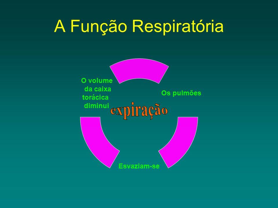 A Função Respiratória expiração