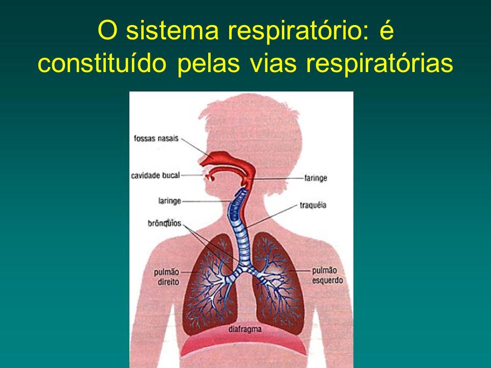 O sistema respiratório: é constituído pelas vias respiratórias