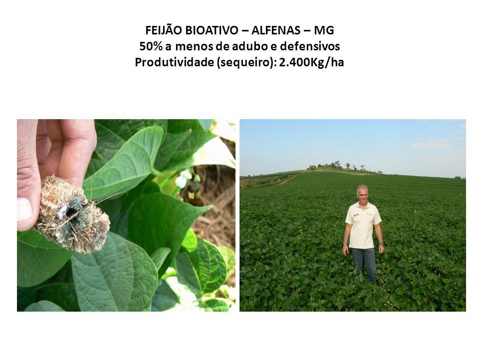 FEIJÃO BIOATIVO – ALFENAS – MG 50% a menos de adubo e defensivos Produtividade (sequeiro): 2.400Kg/ha