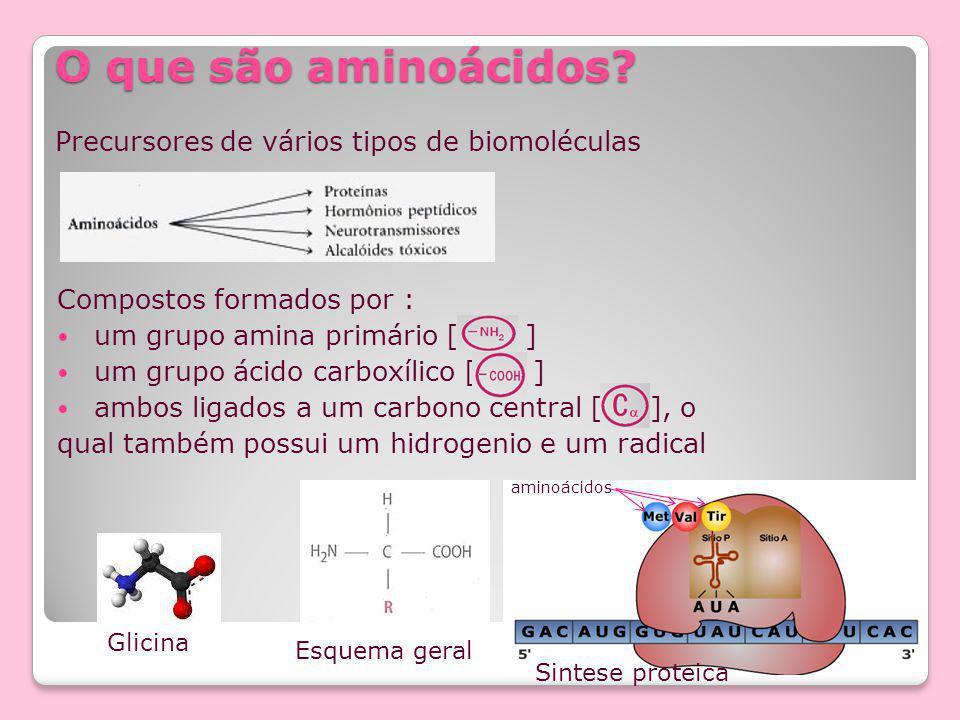 O que são aminoácidos Precursores de vários tipos de biomoléculas