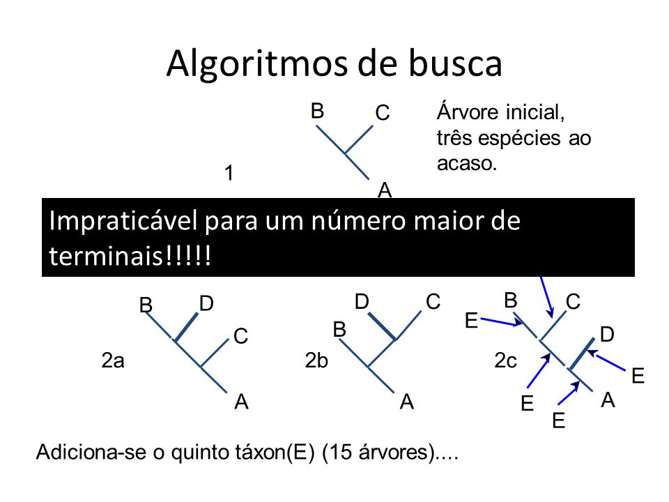 Algoritmos de busca B. C. Árvore inicial, três espécies ao acaso. 1. A. Impraticável para um número maior de terminais!!!!!