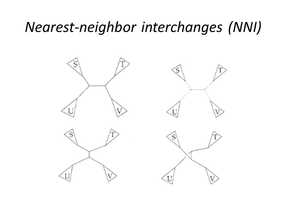 Nearest-neighbor interchanges (NNI)