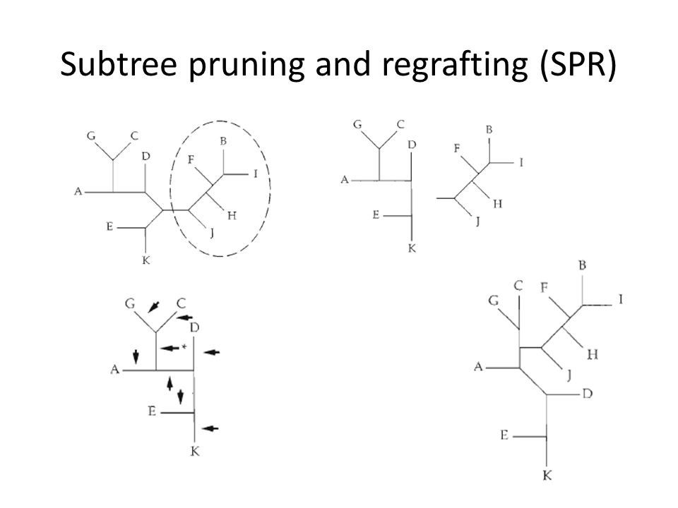 Subtree pruning and regrafting (SPR)