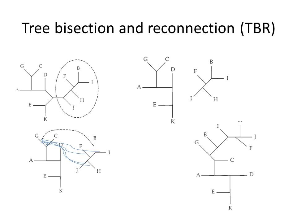 Tree bisection and reconnection (TBR)