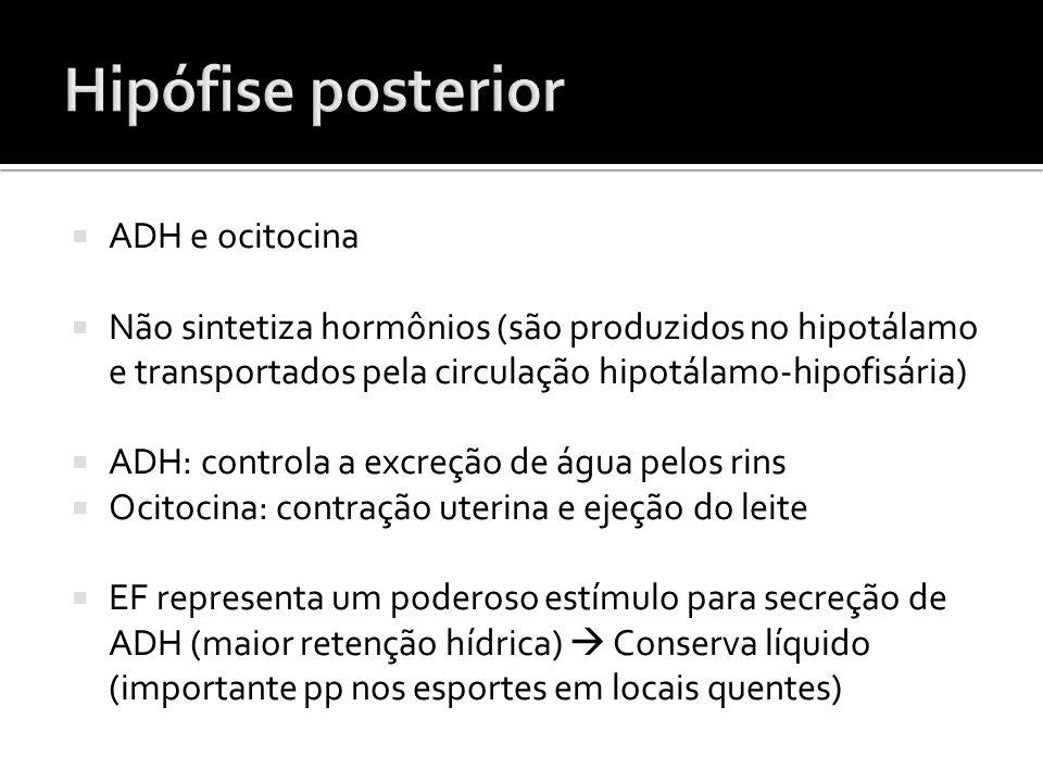 Hipófise posterior ADH e ocitocina