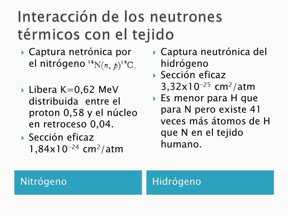 Interacción de los neutrones térmicos con el tejido