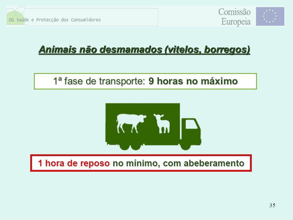 Animais não desmamados (vitelos, borregos)