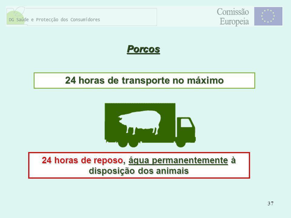 Porcos 24 horas de transporte no máximo