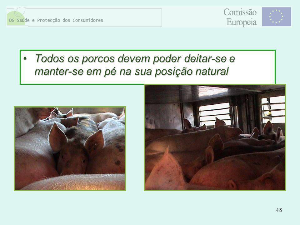 Todos os porcos devem poder deitar-se e manter-se em pé na sua posição natural
