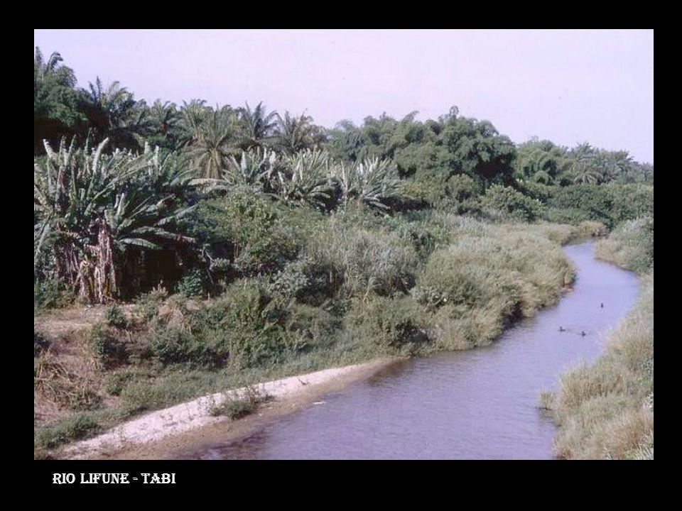 Rio Lifune - tabi