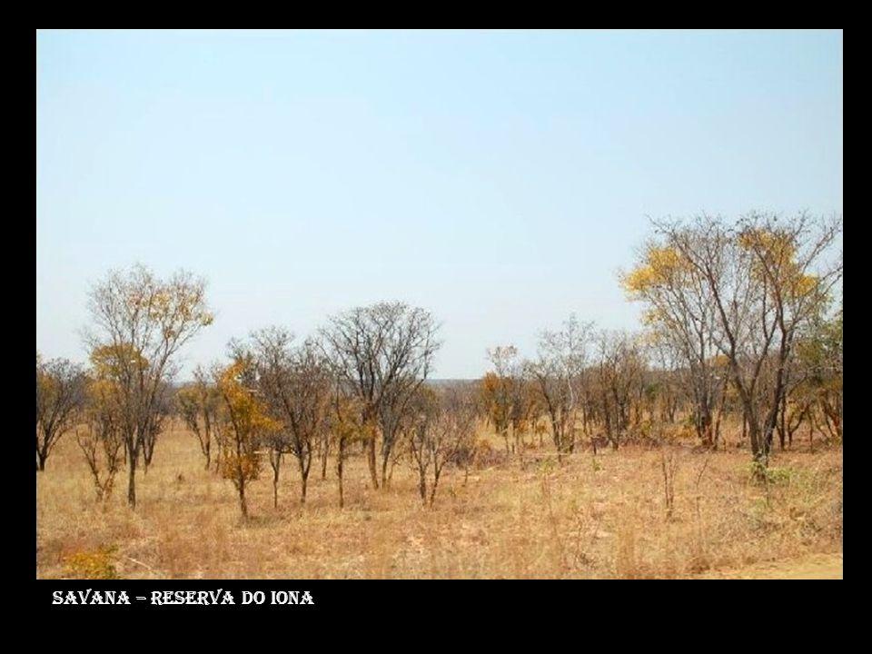 Savana – reserva do iona
