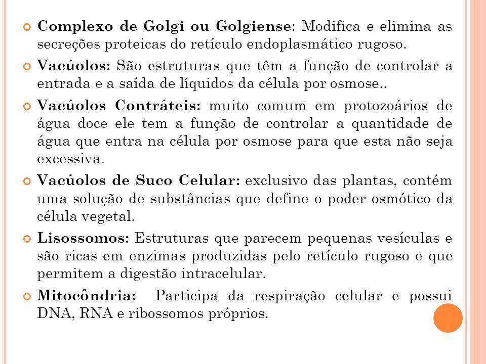 Complexo de Golgi ou Golgiense: Modifica e elimina as secreções proteicas do retículo endoplasmático rugoso.