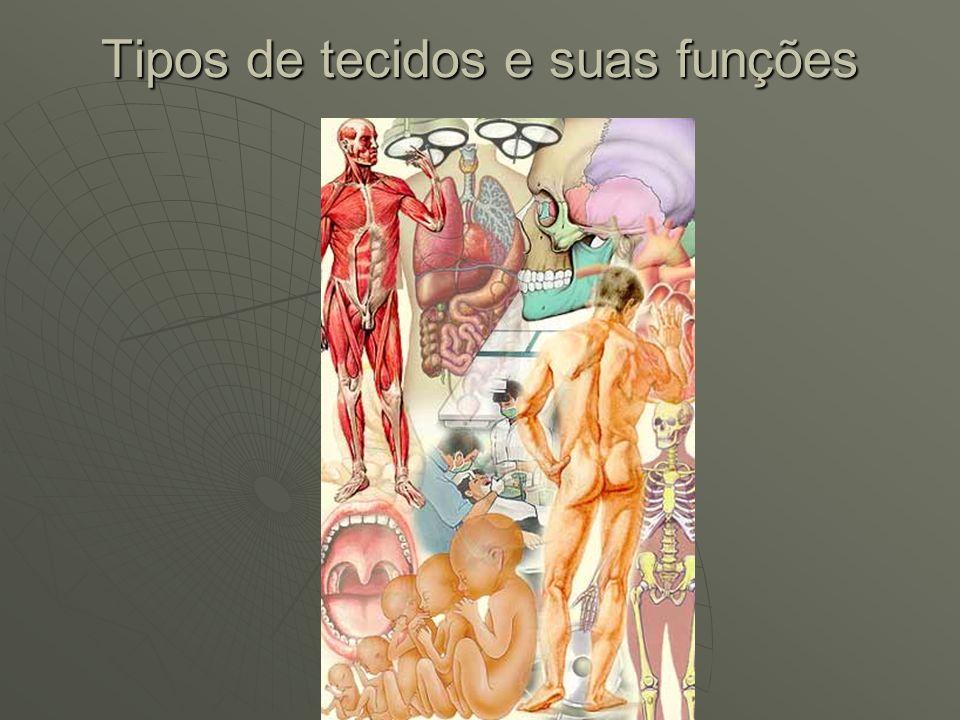 Tipos de tecidos e suas funções