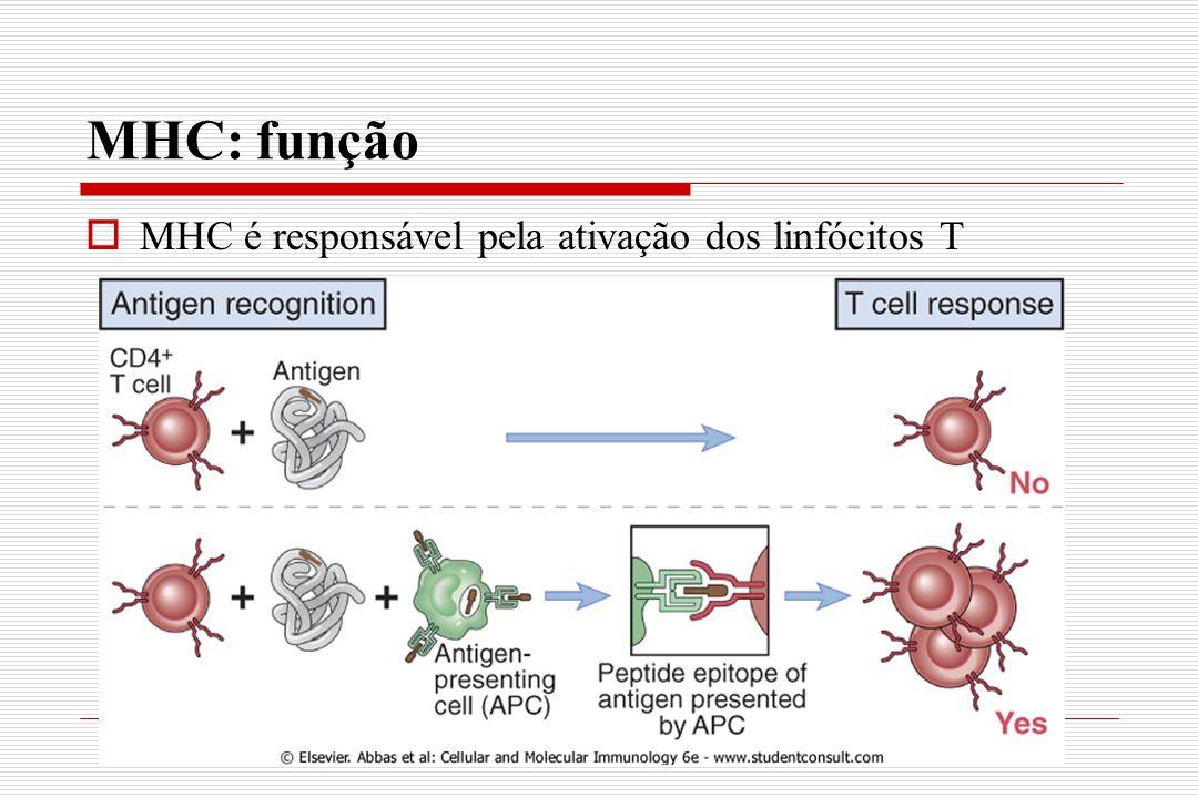 MHC: função MHC é responsável pela ativação dos linfócitos T