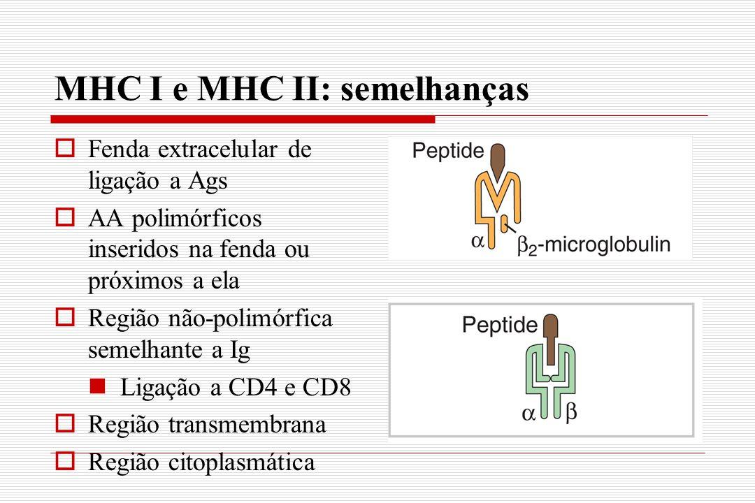 MHC I e MHC II: semelhanças