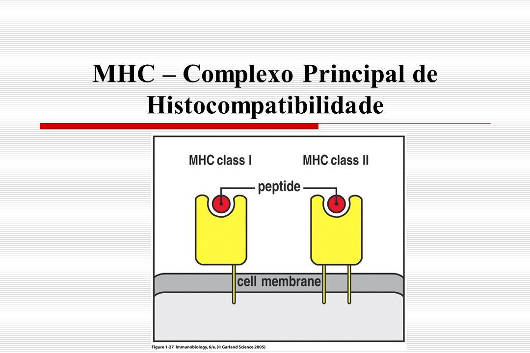 MHC – Complexo Principal de Histocompatibilidade