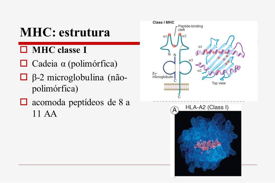 MHC: estrutura MHC classe I Cadeia α (polimórfica)