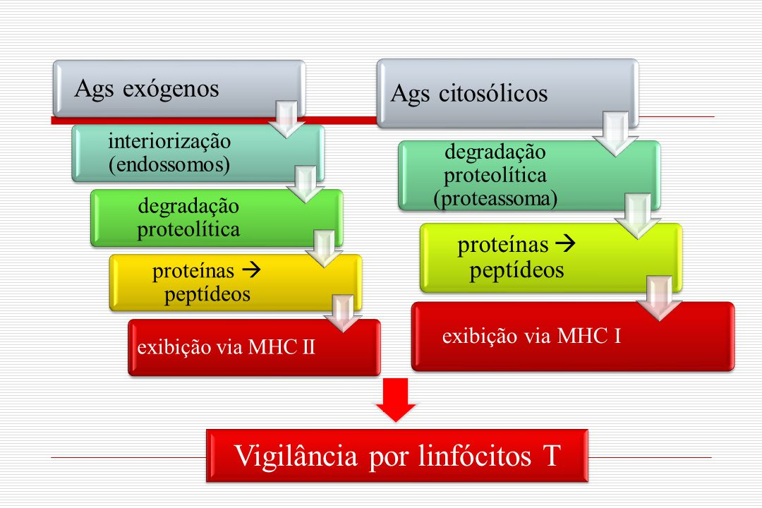 Vigilância por linfócitos T