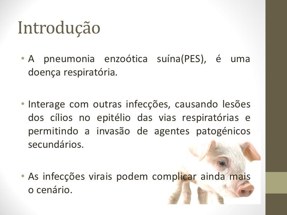 Introdução A pneumonia enzoótica suína(PES), é uma doença respiratória.