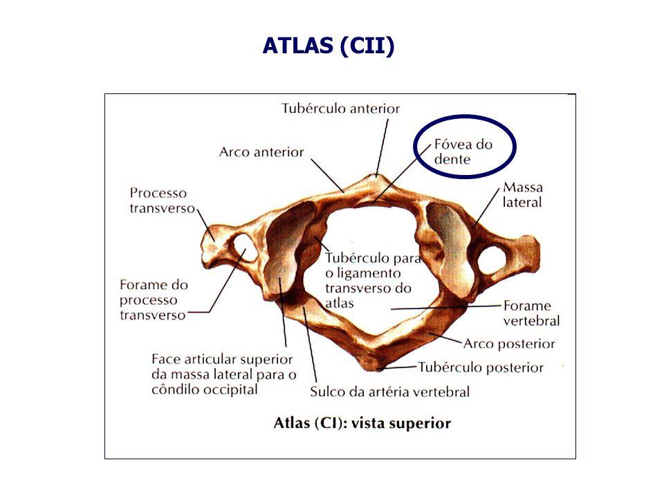 ATLAS (CII)