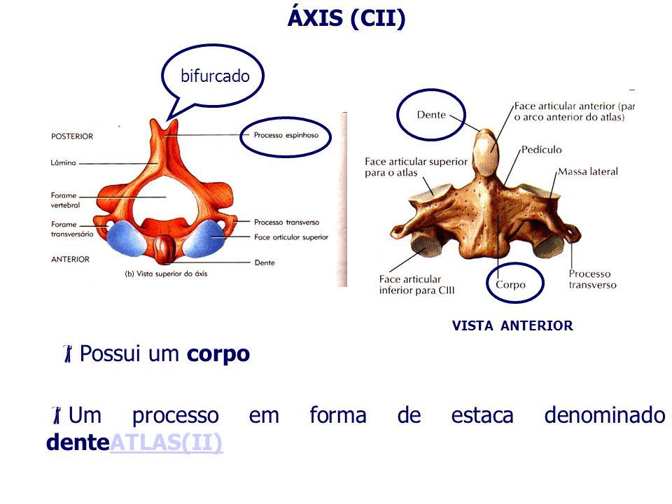 Um processo em forma de estaca denominado denteATLAS(II)