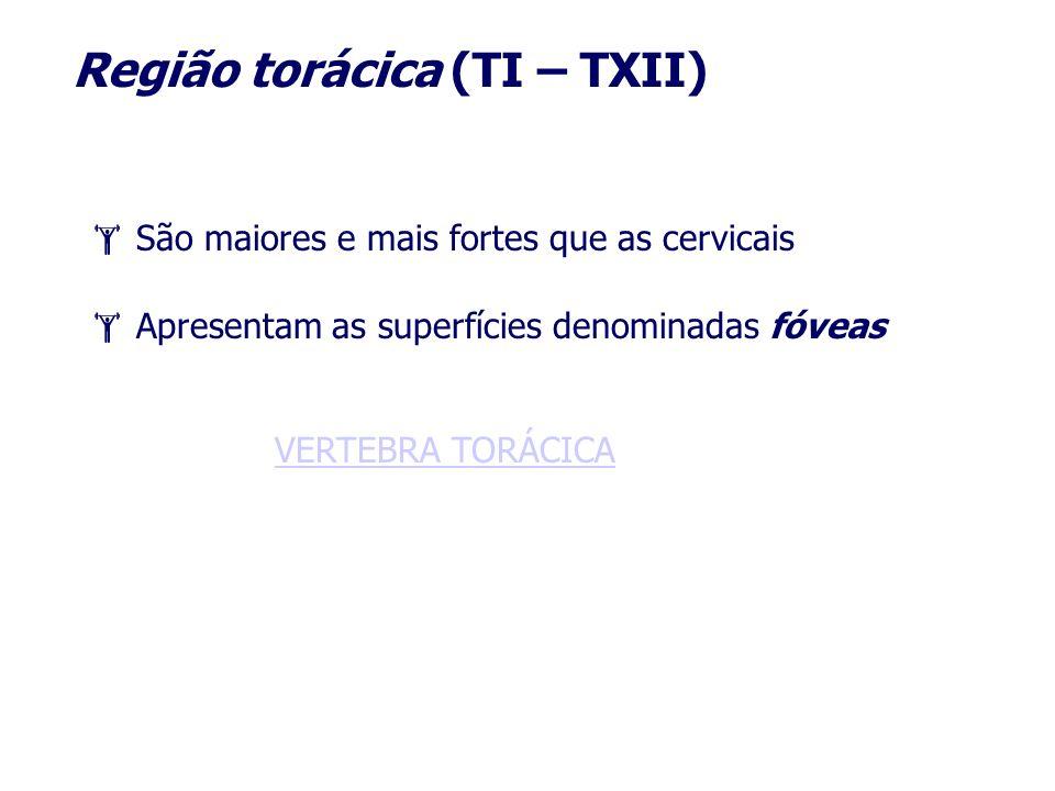 Região torácica (TI – TXII)