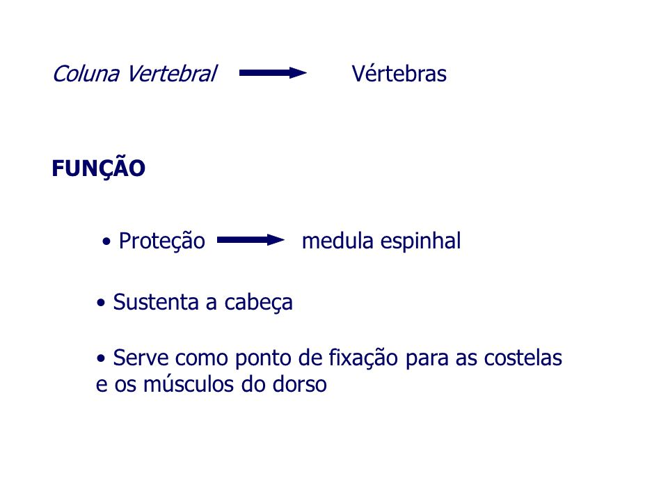 Coluna VertebralVértebras.FUNÇÃO. Proteção. medula espinhal.