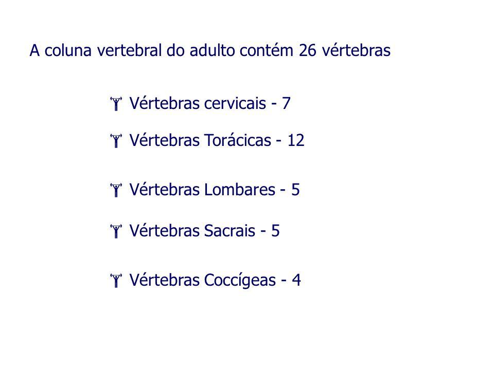 A coluna vertebral do adulto contém 26 vértebras