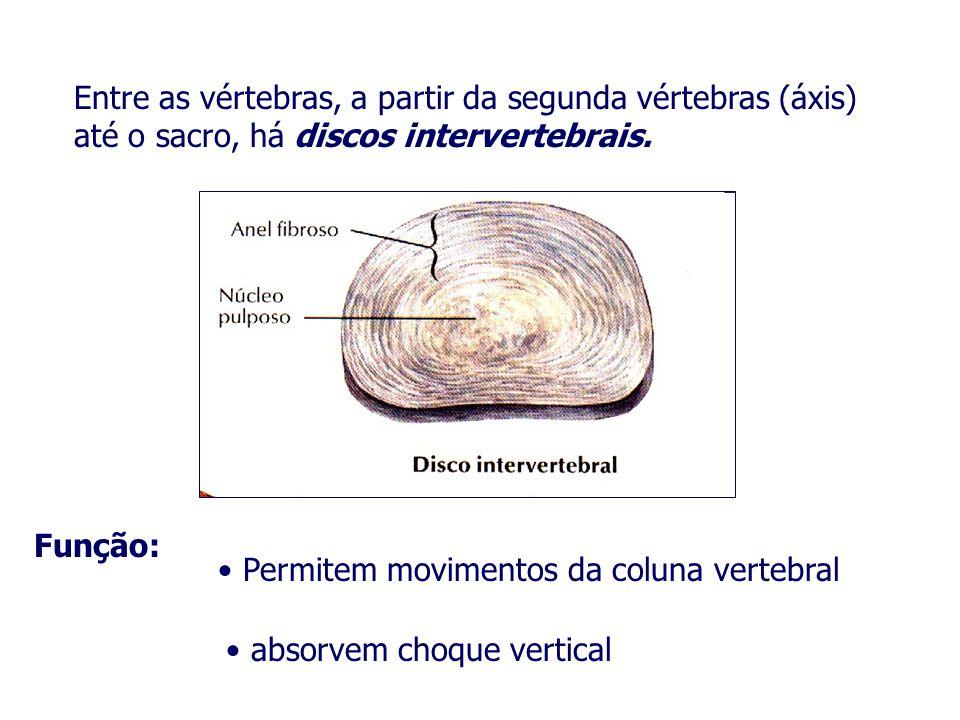 Entre as vértebras, a partir da segunda vértebras (áxis) até o sacro, há discos intervertebrais.