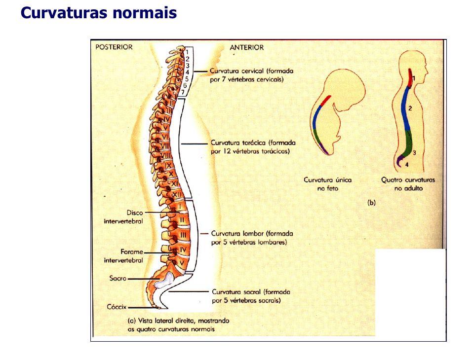 Curvaturas normais