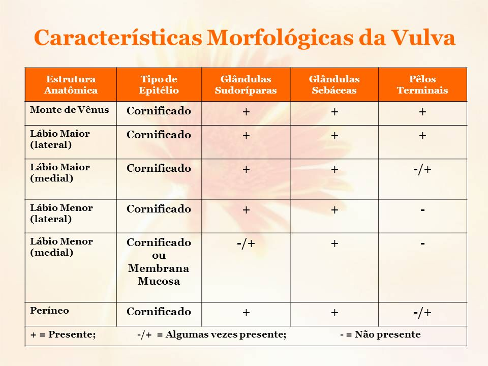 Glândulas Sudoríparas Cornificado ou Membrana Mucosa