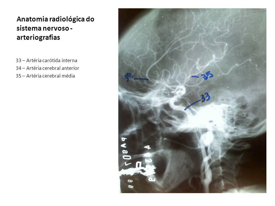 Anatomia radiológica do sistema nervoso - arteriografias