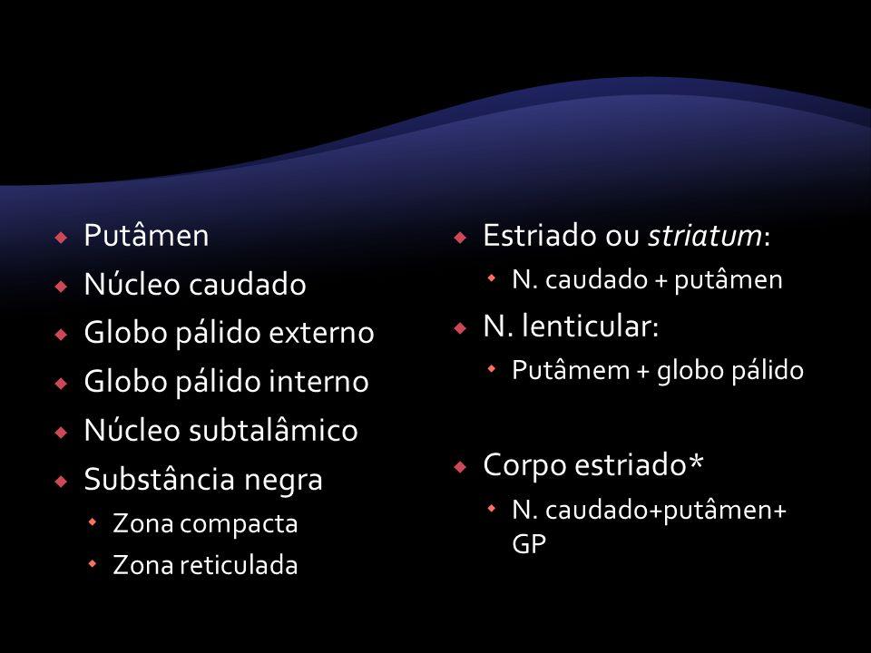 Putâmen Núcleo caudado Globo pálido externo Globo pálido interno