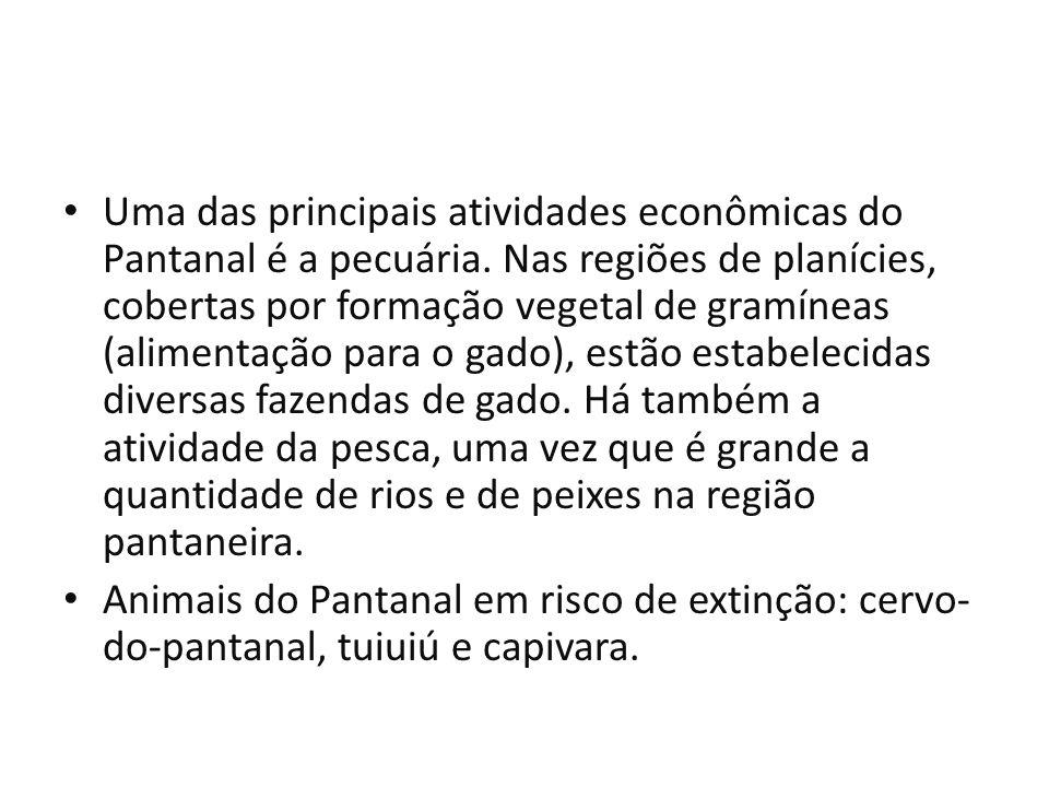 Uma das principais atividades econômicas do Pantanal é a pecuária