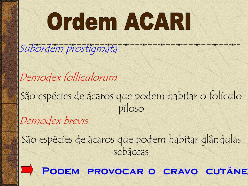 Ordem ACARI Subordem prostigmata Demodex folliculorum