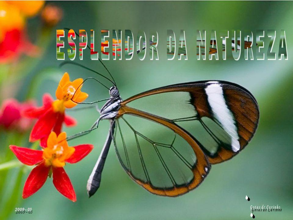 ESPLENDOR DA NATUREZA S 2009 - 03 Gotas de Carinho