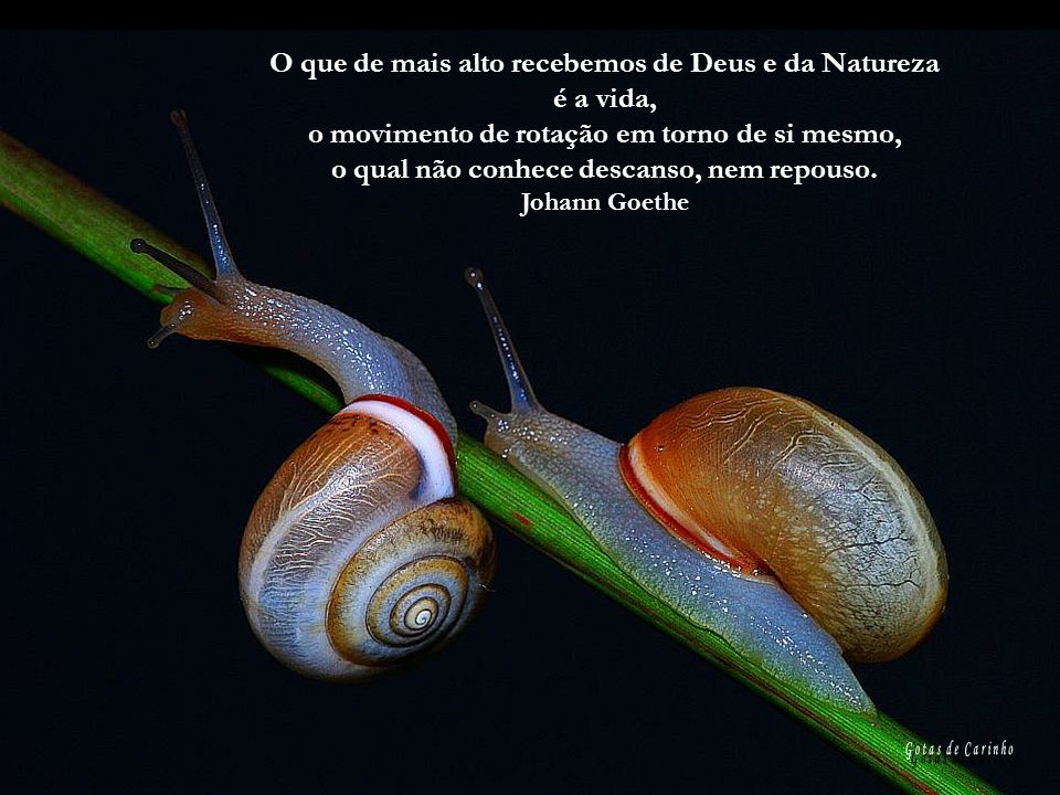 O que de mais alto recebemos de Deus e da Natureza é a vida,