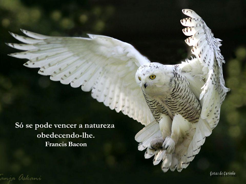 Só se pode vencer a natureza