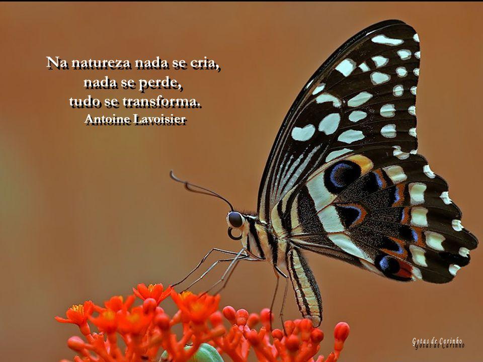 Na natureza nada se cria,