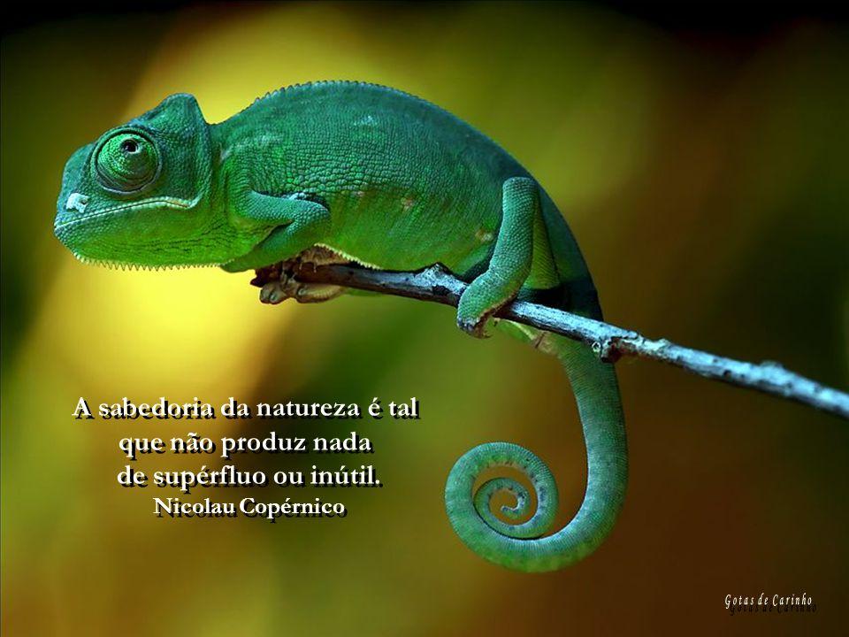 A sabedoria da natureza é tal