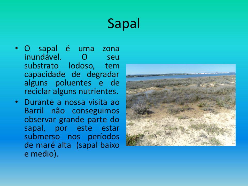 Sapal O sapal é uma zona inundável. O seu substrato lodoso, tem capacidade de degradar alguns poluentes e de reciclar alguns nutrientes.