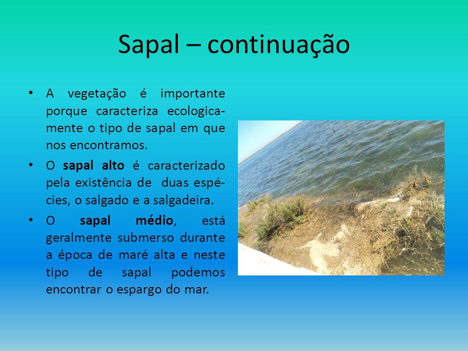 Sapal – continuação A vegetação é importante porque caracteriza ecologica-mente o tipo de sapal em que nos encontramos.