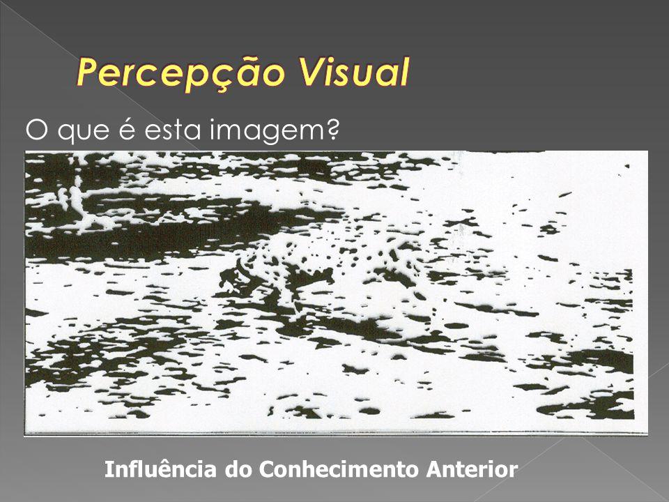 Percepção Visual O que é esta imagem