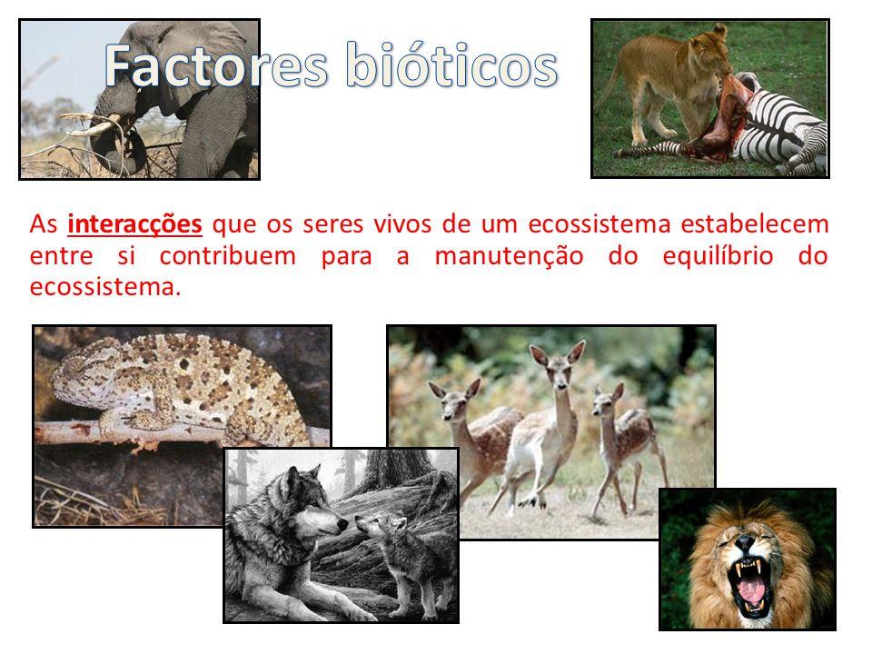 Factores bióticos As interacções que os seres vivos de um ecossistema estabelecem entre si contribuem para a manutenção do equilíbrio do ecossistema.