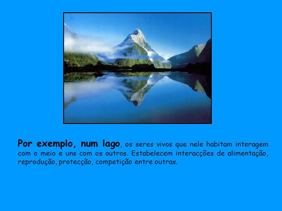 Por exemplo, num lago, os seres vivos que nele habitam interagem com o meio e uns com os outros.