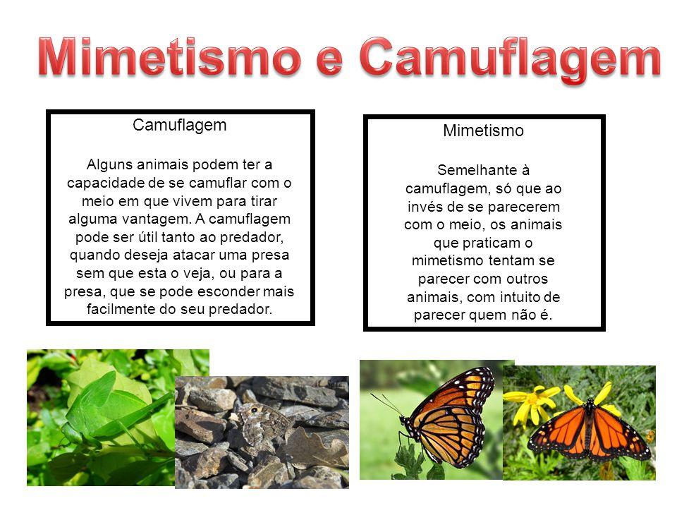 Mimetismo e Camuflagem