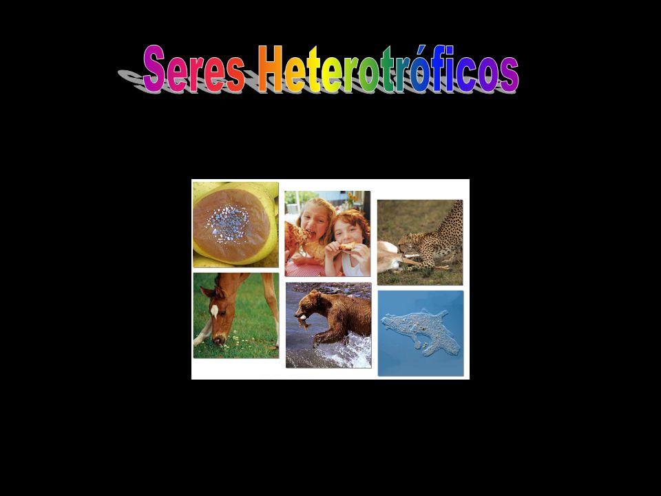 Seres Heterotróficos